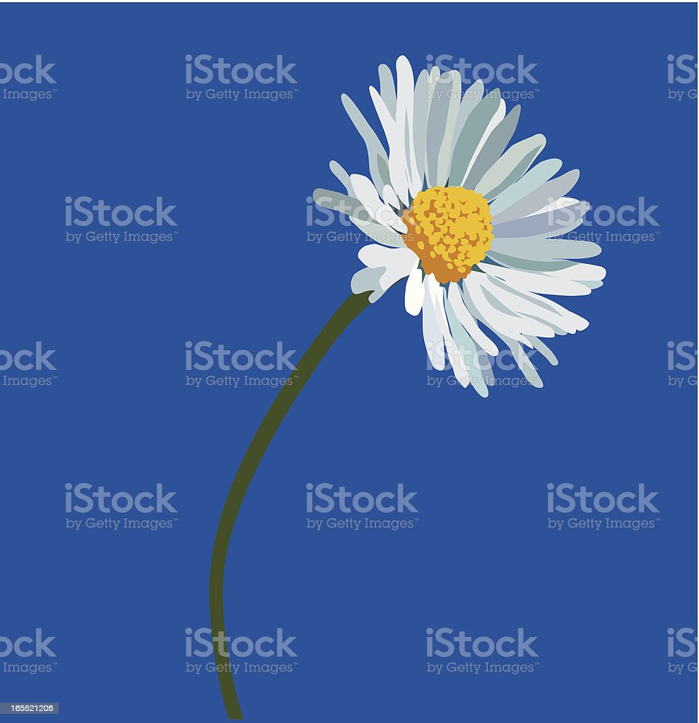 camomile royalty-free camomile stock vector art & more images of blue