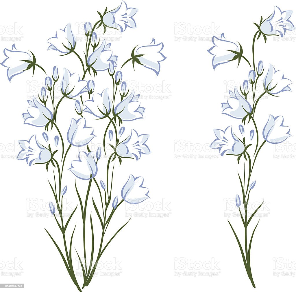 Campanula vector art illustration