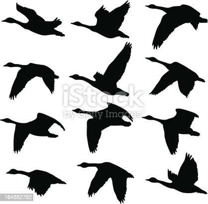 A collection of unique Canadian Goose silhouettes. 12 unique silhouettes