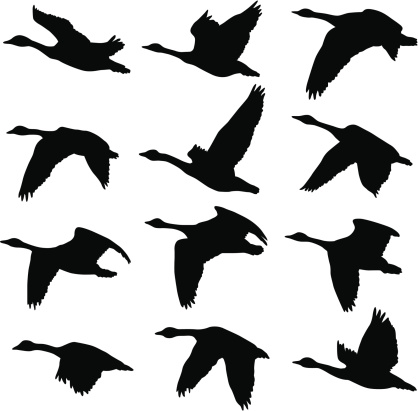 Canadian Geese Silhouettes