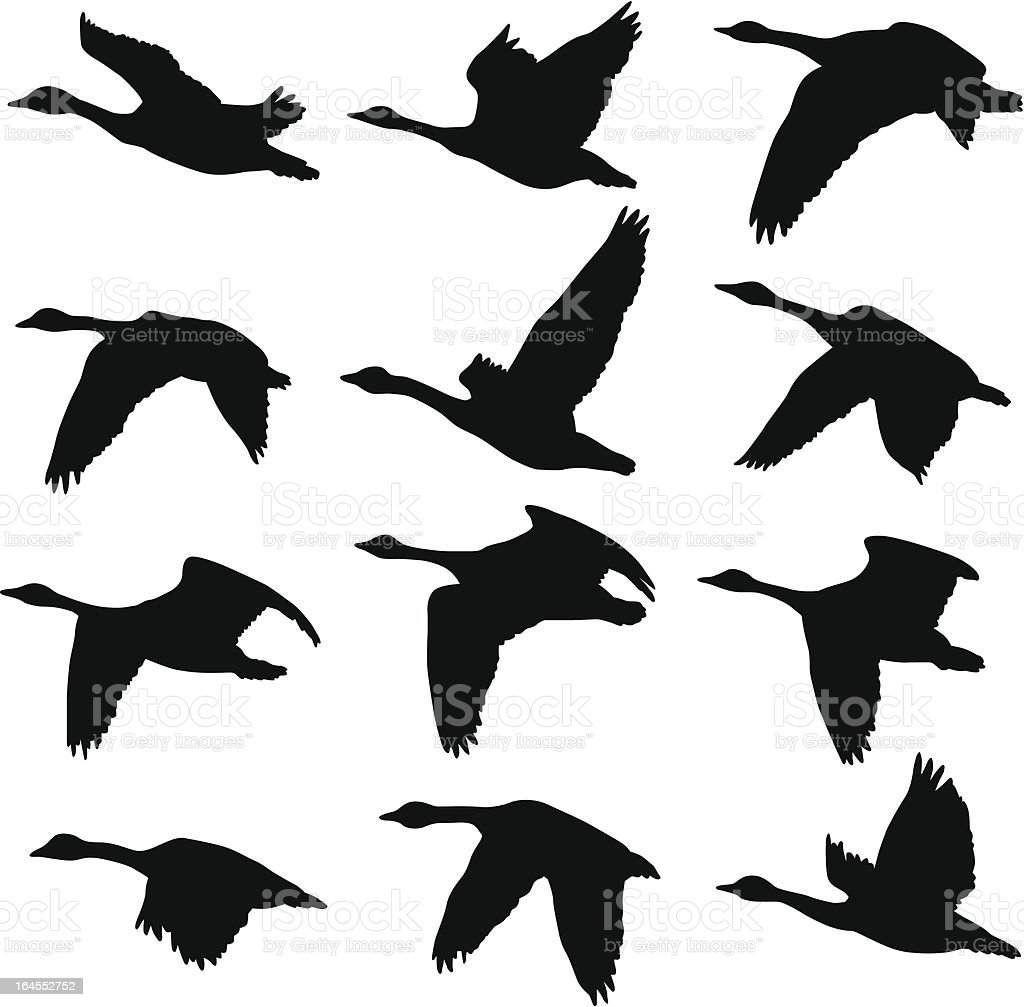 Canadian Geese Silhouettes vector art illustration