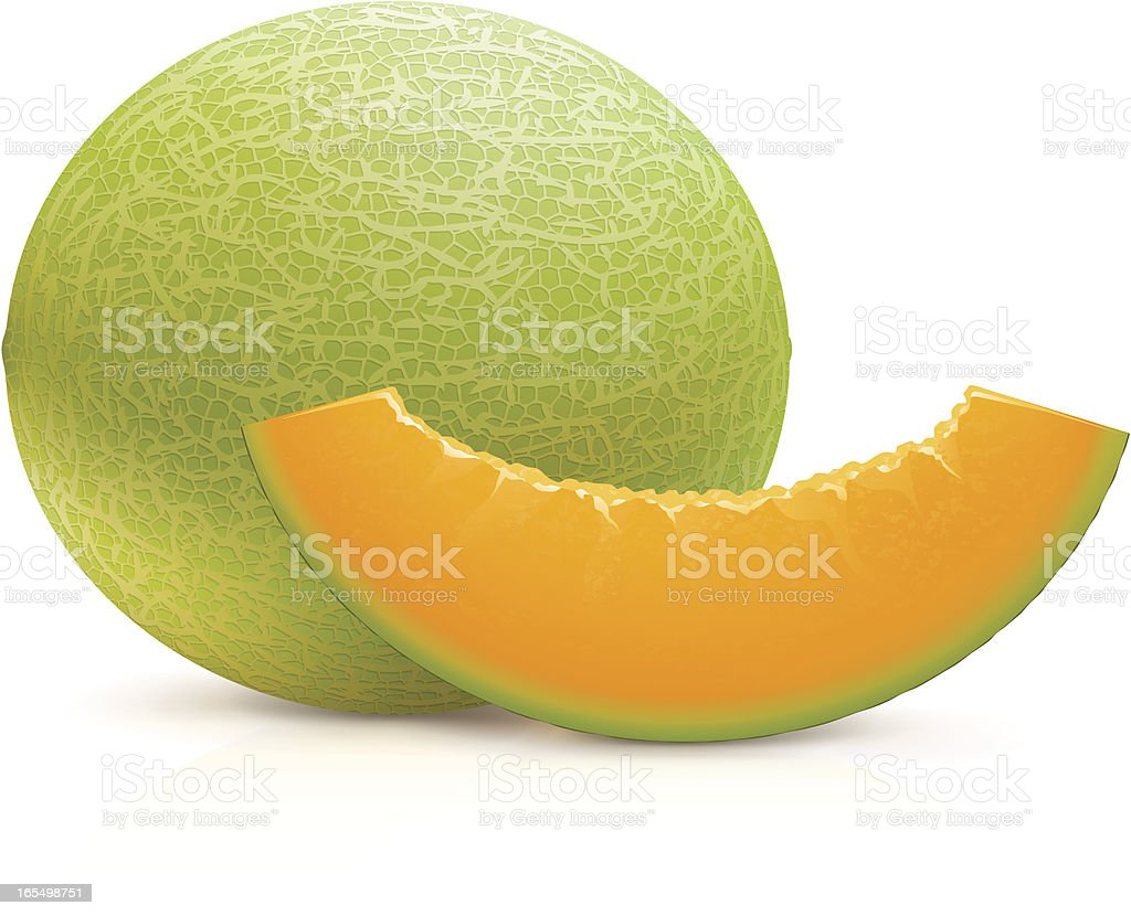 Cantaloupe vector art illustration