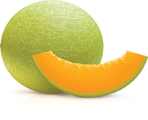 Cantaloupe vector art illustration