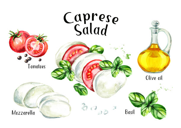 Caprese salad ingredients Recipe. Watercolor hand drawn illustration isolated on white background Caprese salad ingredients Recipe. Watercolor hand drawn illustration isolated on white background mozzarella stock illustrations