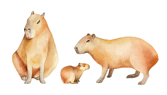 Capybaras watercolor family set, hand drawn wildlife illustration isolated on a white background.