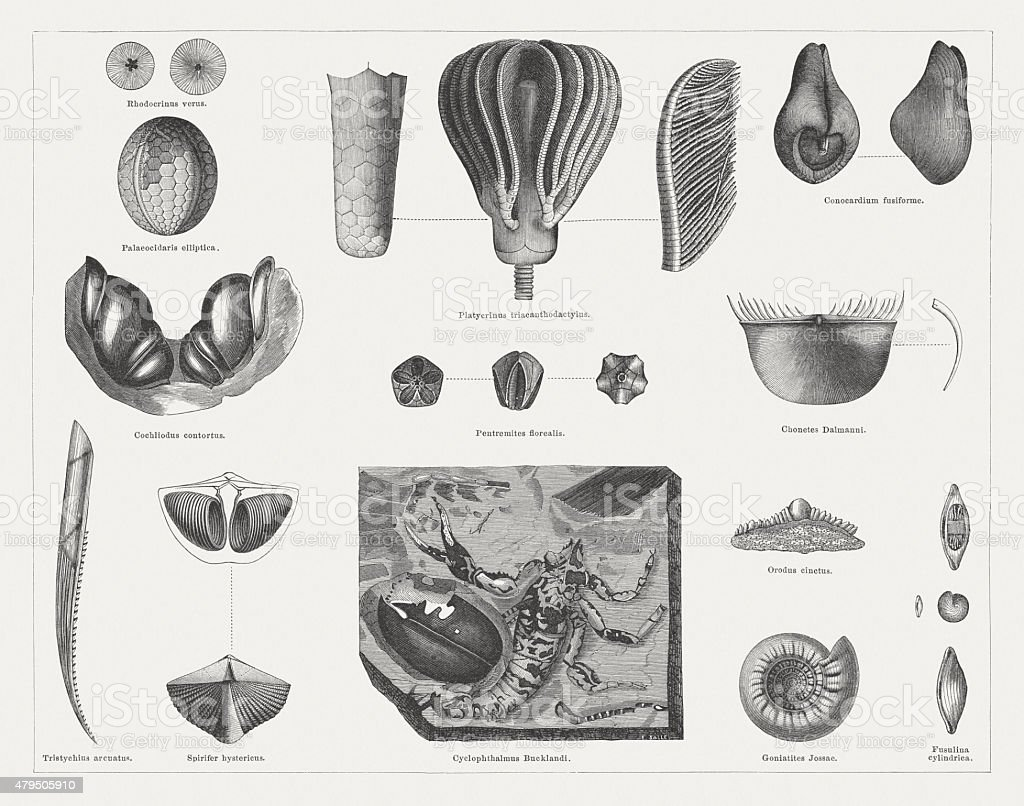 Carboniferous fossils, wood engravings, published in 1878 vector art illustration