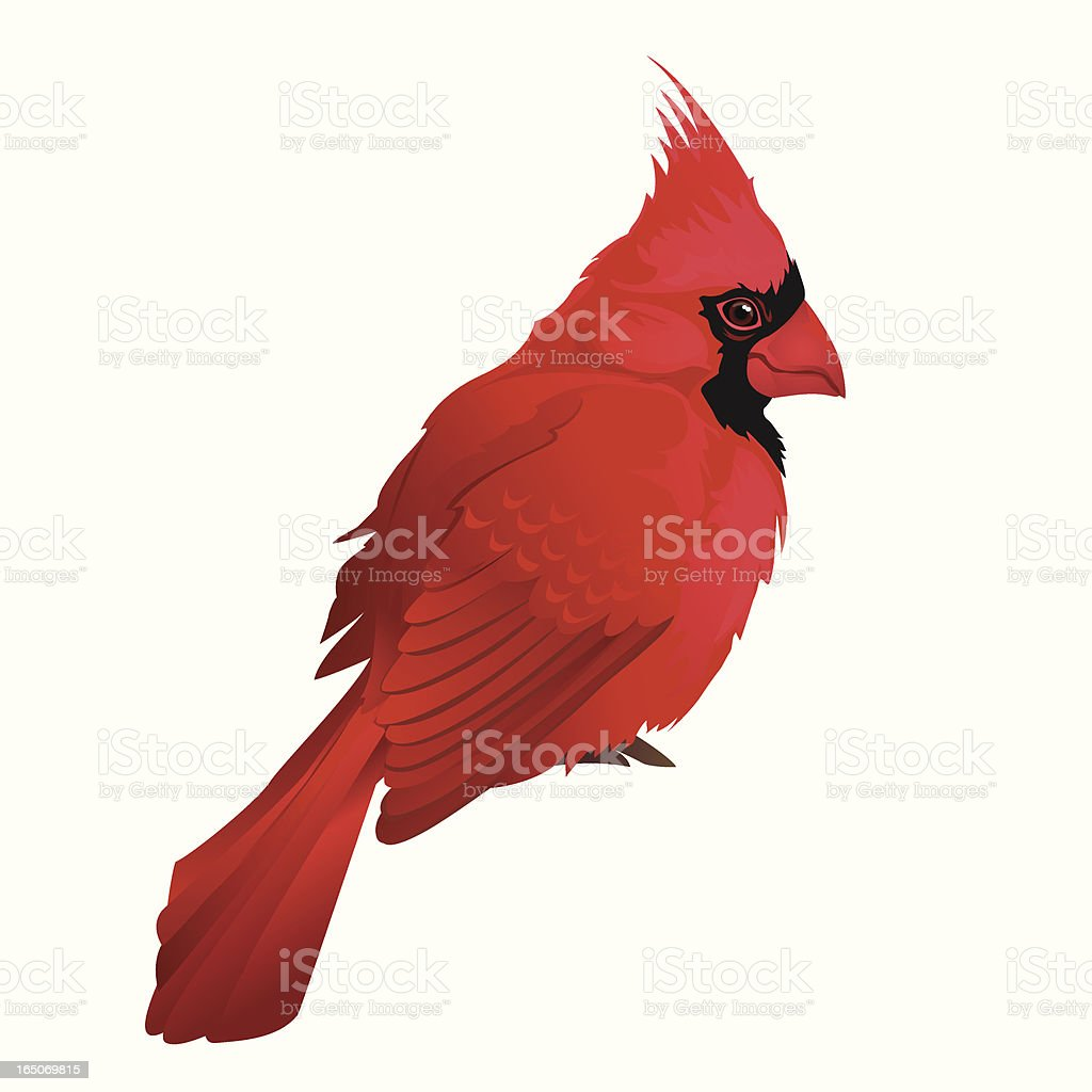 Cardinal royalty-free cardinal stock vector art & more images of cut out