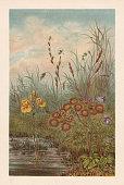 Carnivorous plants in peat bog: Bladderwort (Utricularia vulgaris, left), Sundew (Drosera rotundifolia, center), Butterwort (Pinguicula vulgaris, right). Chromolithograph, published in 1894.