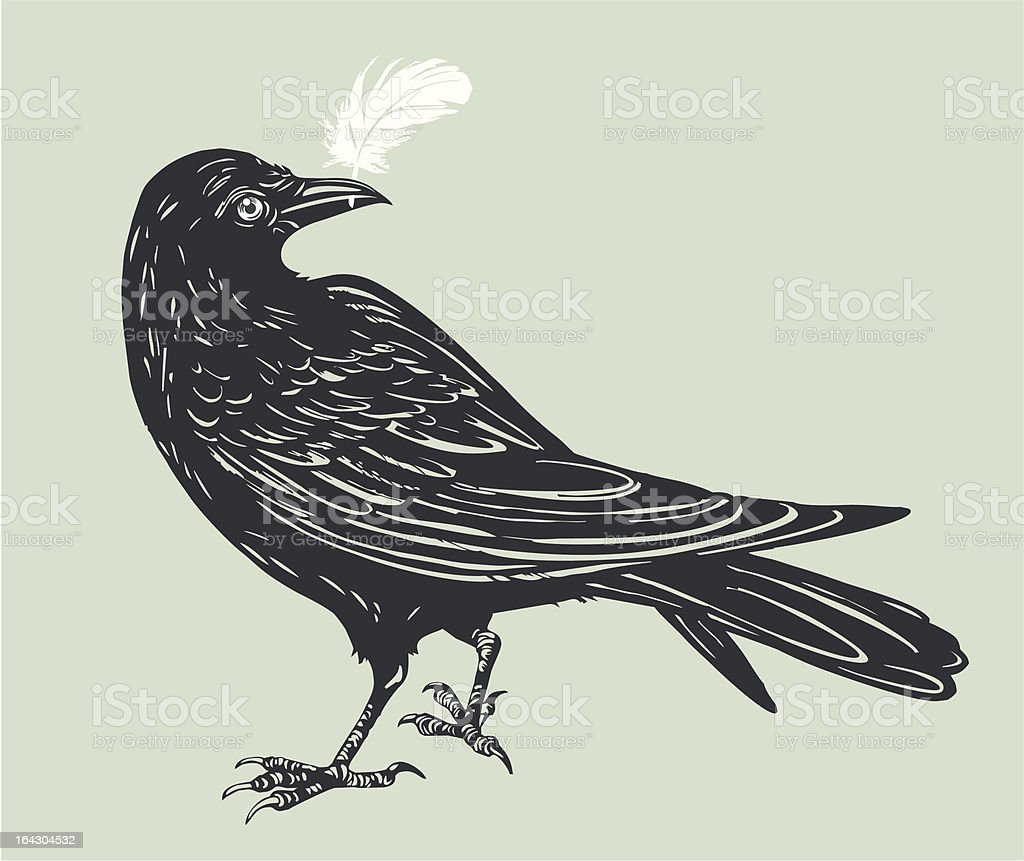 carrion-crow with white  feather vector art illustration