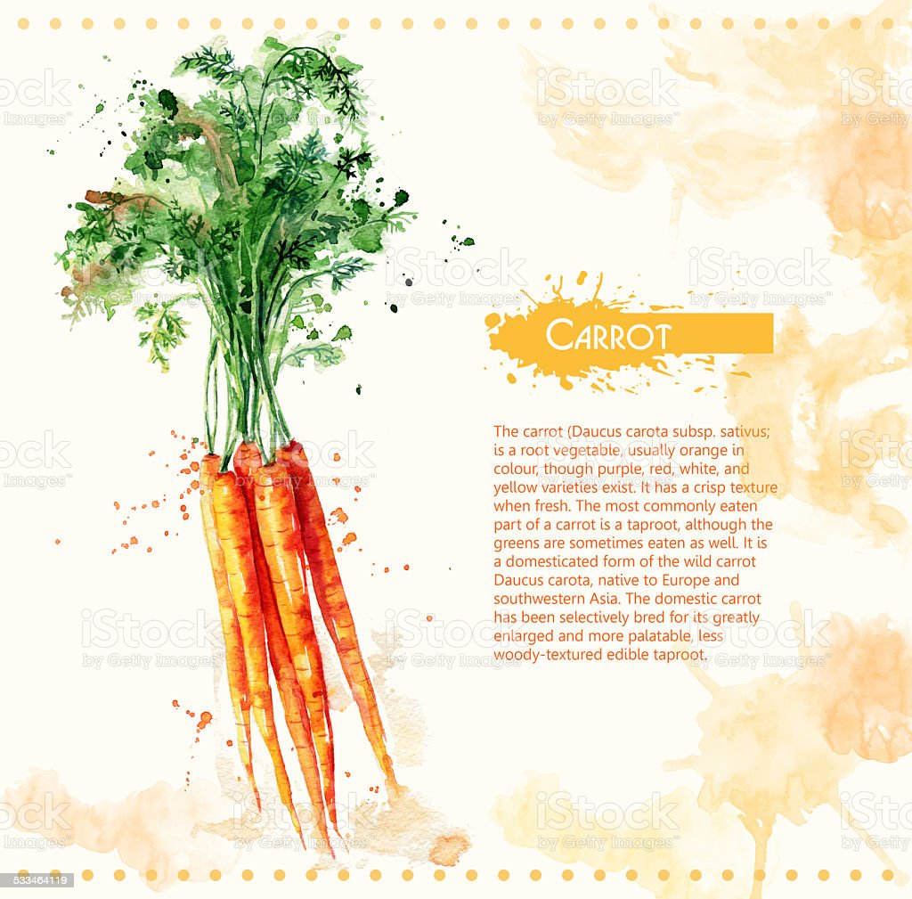 Carrot. Raw vegetable. vector art illustration