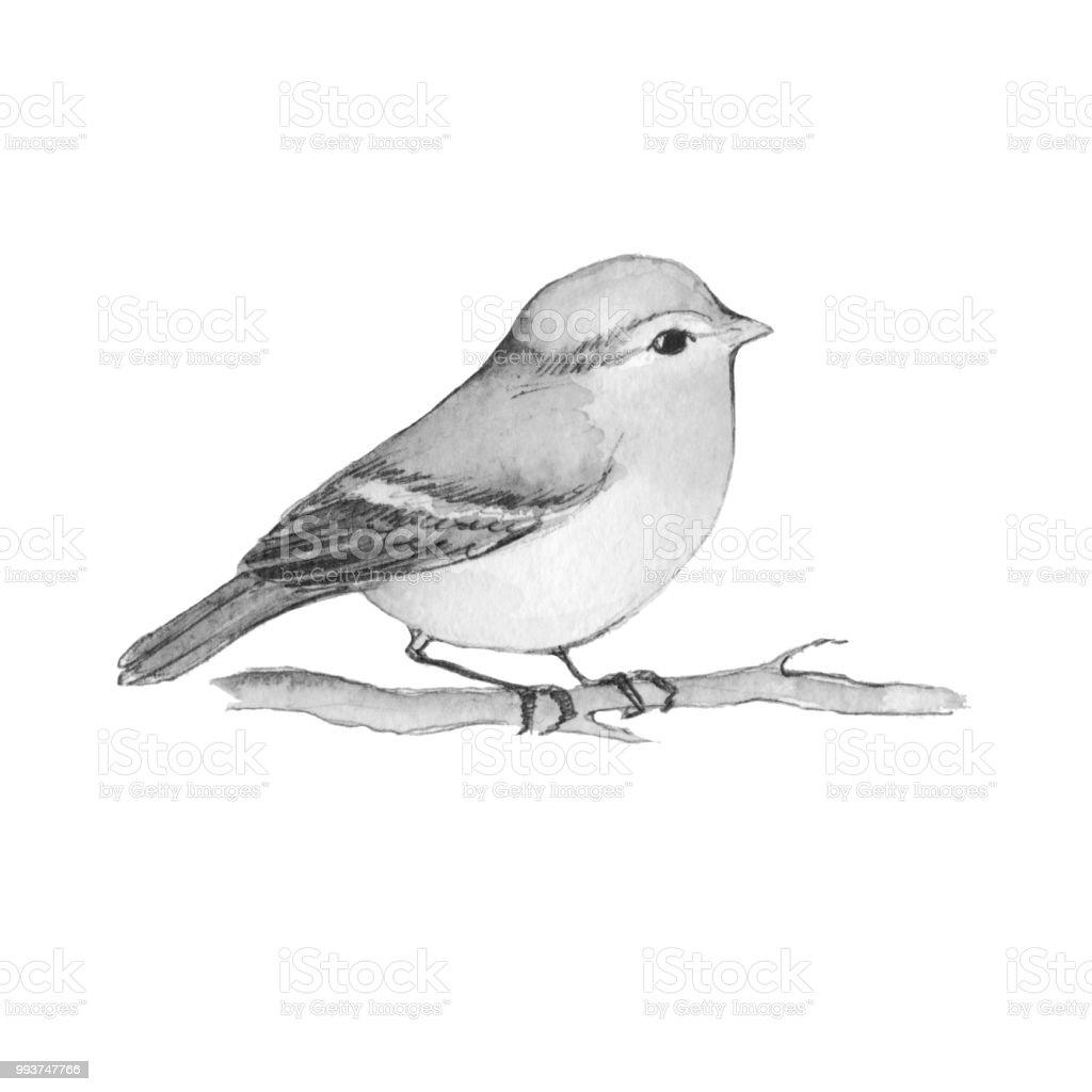 Dessin Animé Oiseau Sur La Branche Noir Et Blanc Vecteurs