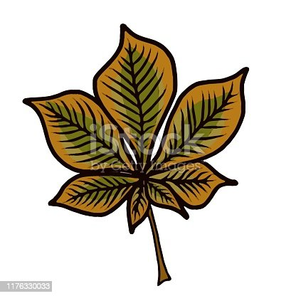 cartoon style drwaing of a single chestnut leaf in autumn colors