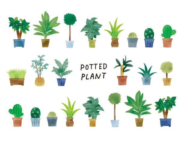 illustrazioni stock, clip art, cartoni animati e icone di tendenza di casual touch simple green potted plant illustration set - forest bathing