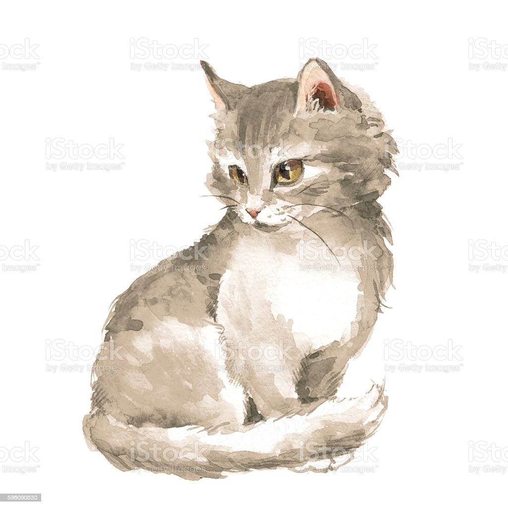 Cat 1. Gray fluffy kitten. Watercolor painting royalty-free cat 1 gray fluffy kitten watercolor painting stock vector art & more images of animal