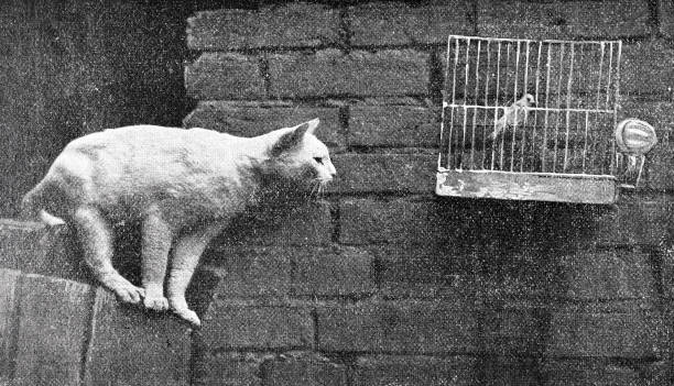 illustrations, cliparts, dessins animés et icônes de chat à la recherche d'un oiseau en cage - dessin cage a oiseaux