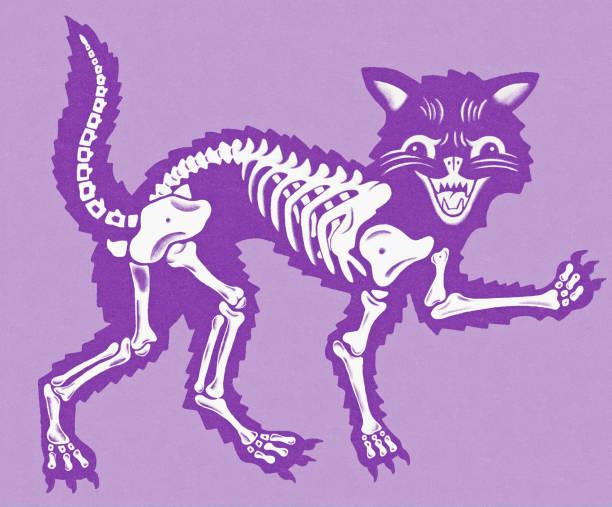 Cat Skeleton Cat Skeleton cat skeleton stock illustrations