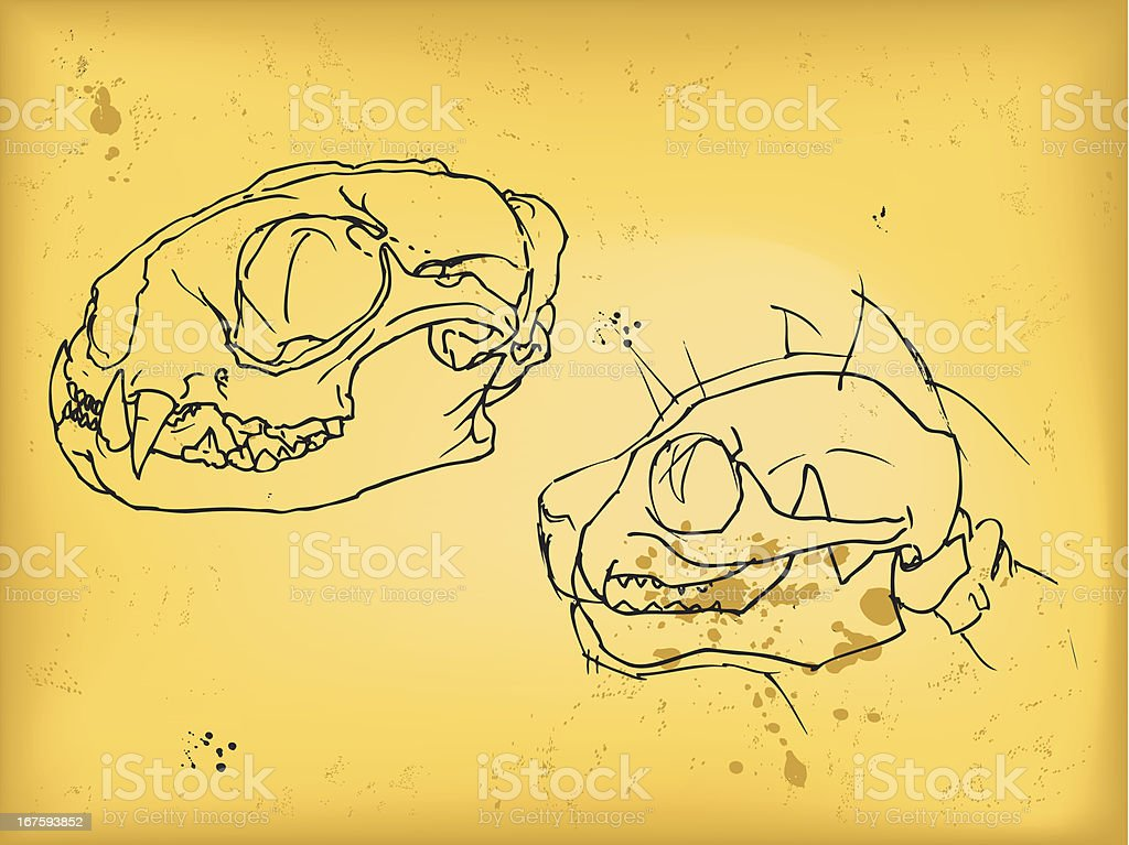 Cat skull drawing royalty-free stock vector art