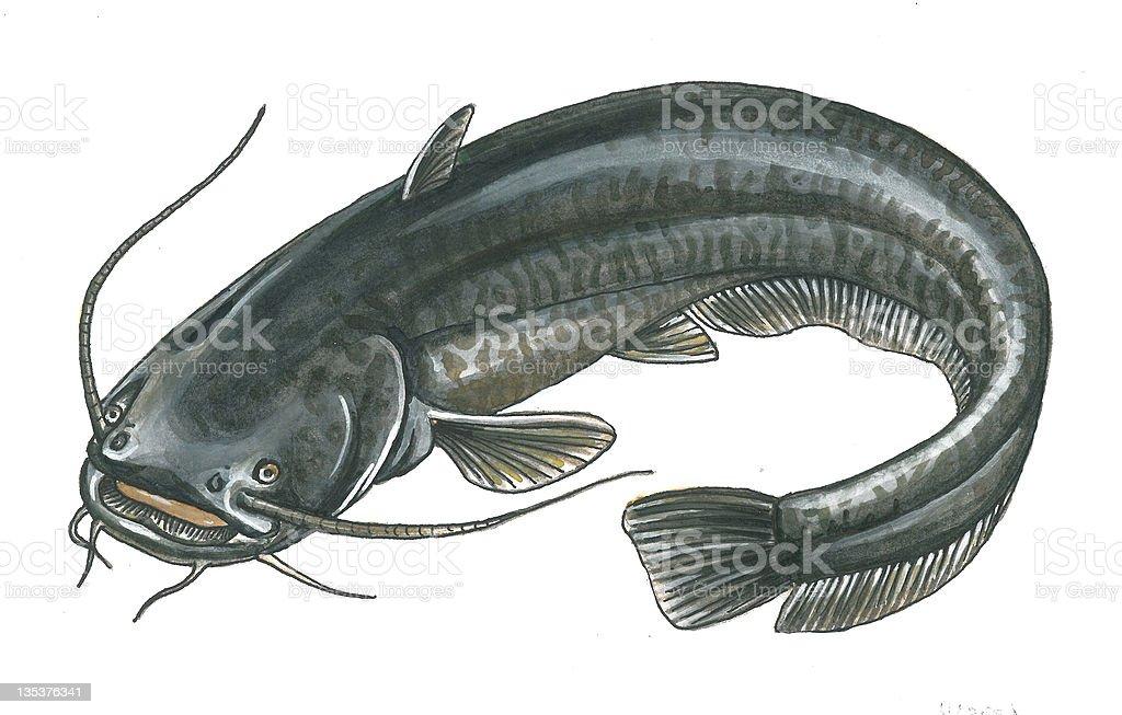 Catfish vector art illustration