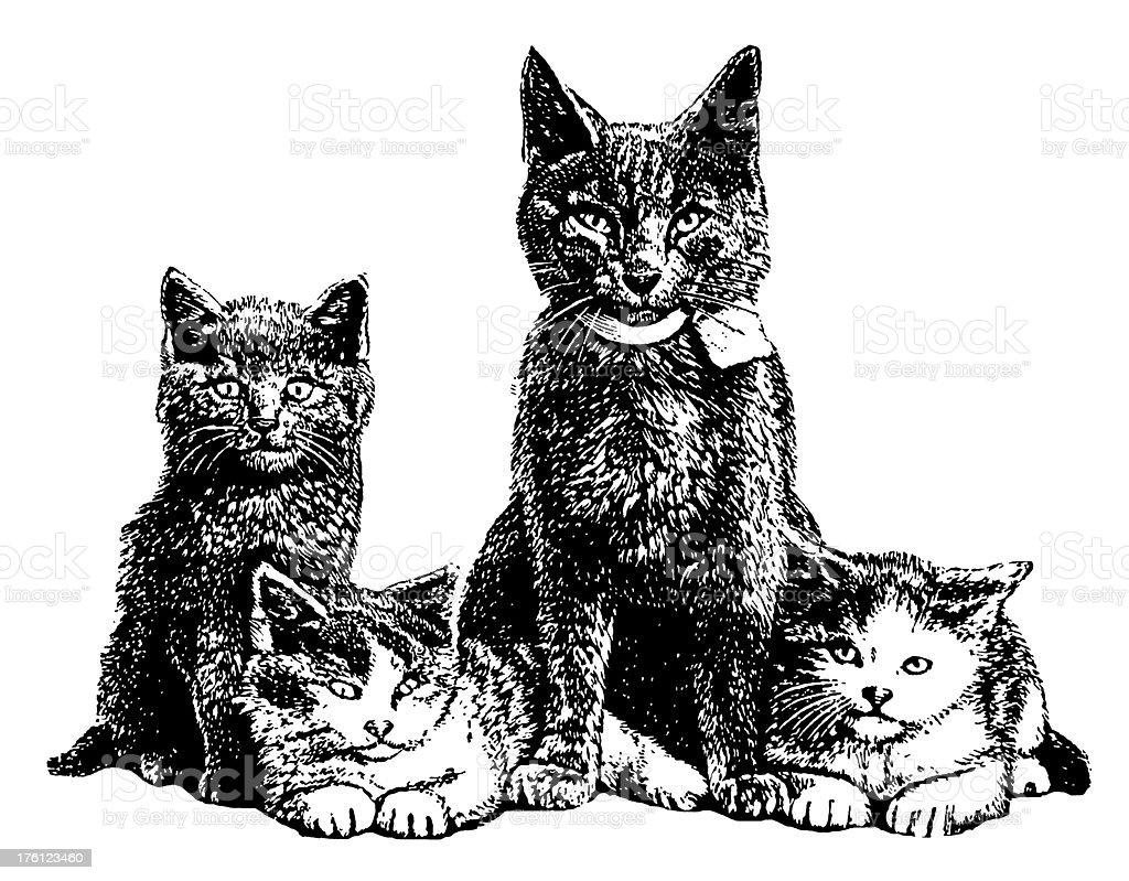 Gatti e illustrazioni di animali antico immagini - Animale domestico da colorare pagine gratis ...