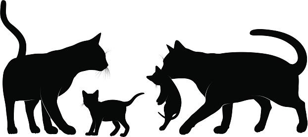 Cats family.