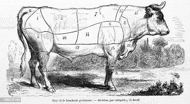 Rind Fleisch Rindfleisch Bereiche Stock Vektor Art und mehr Bilder von Alt