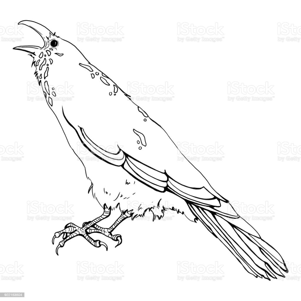 Cawing Crow vector art illustration