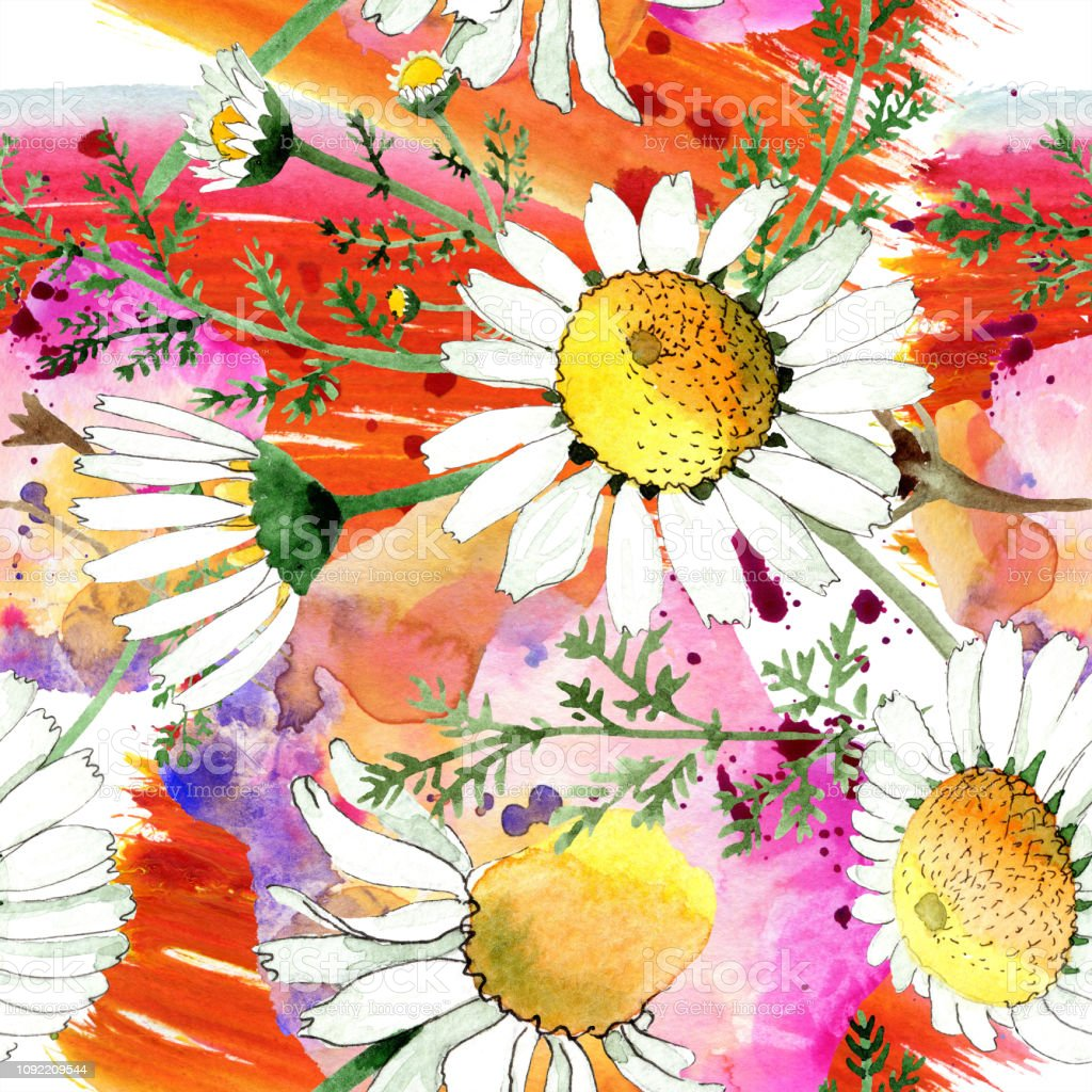 Chamomile Floral Botanical Flower Watercolor Background