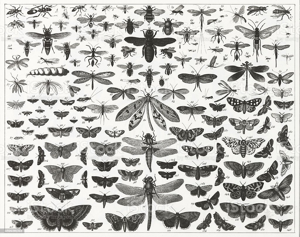 chart showing various types and sizes of flying insects vector art illustration