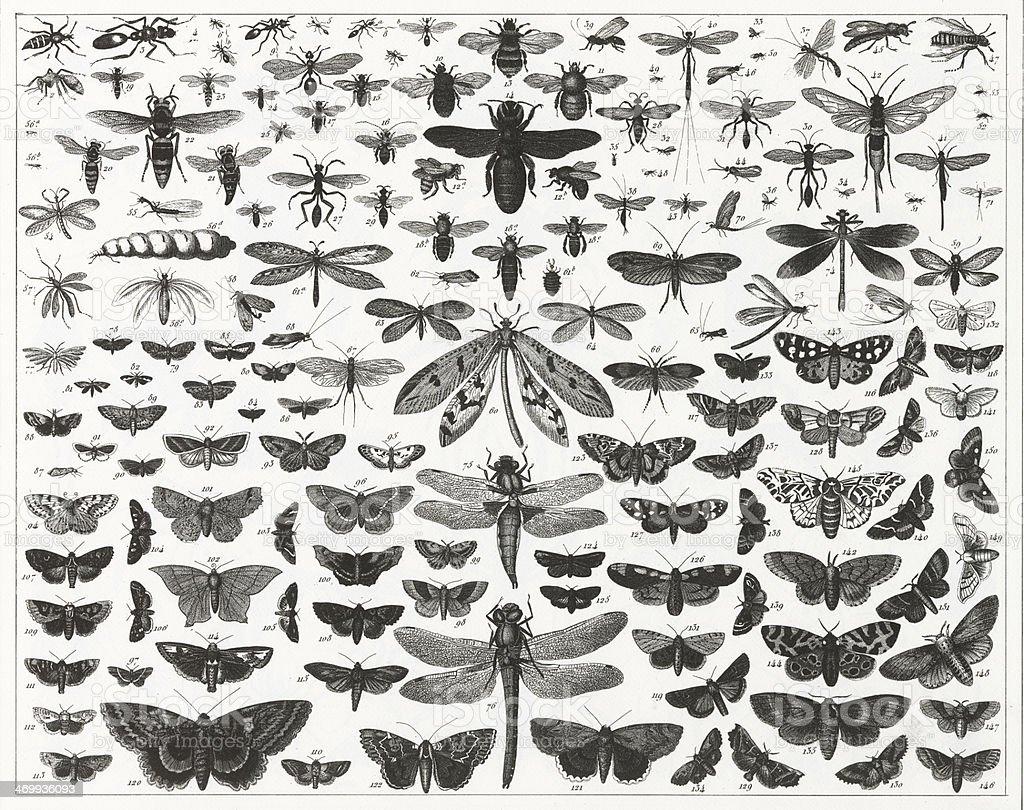 チャート表示のさまざまな種類と規模の虫 ベクターアートイラスト