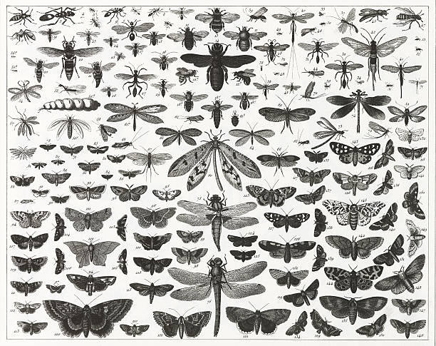 chart showing various types and sizes of flying insects - bugs stock illustrations, clip art, cartoons, & icons