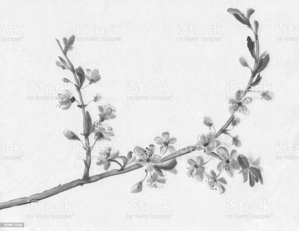 Kiraz Ağacı çiçekli Mürekkep Boyama Stok Vektör Sanatı 2015nin