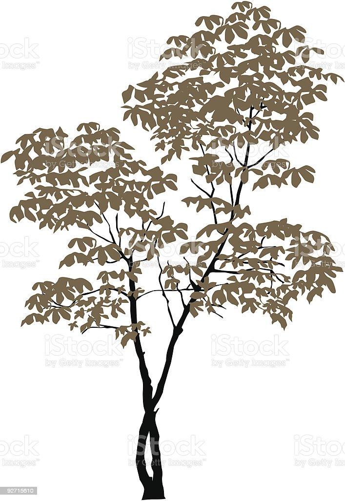 Chestnut-tree royalty-free stock vector art