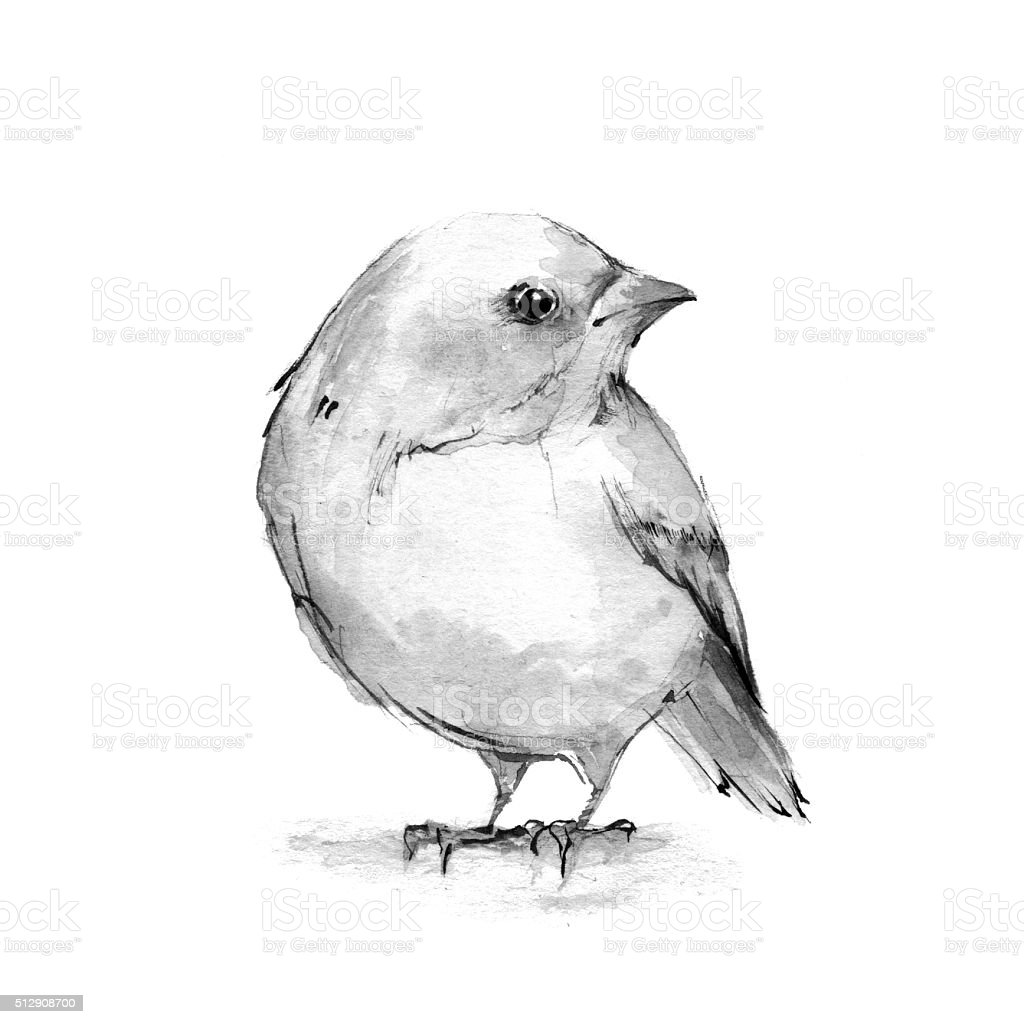 Chick. Watercolor illustration. Black and white vector art illustration