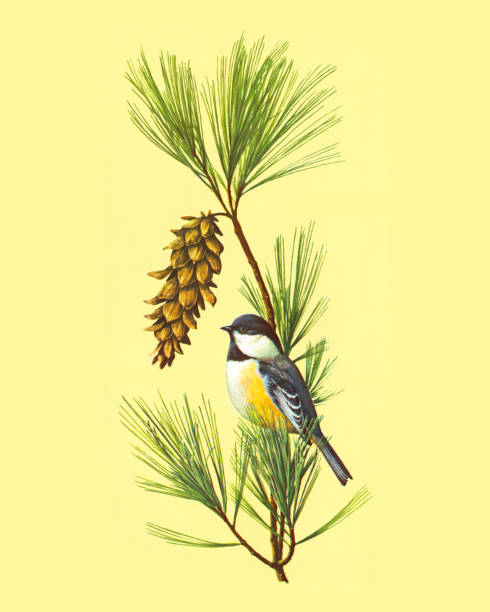 Chickadee Perched on a Branch Chickadee Perched on a Branch chickadee stock illustrations