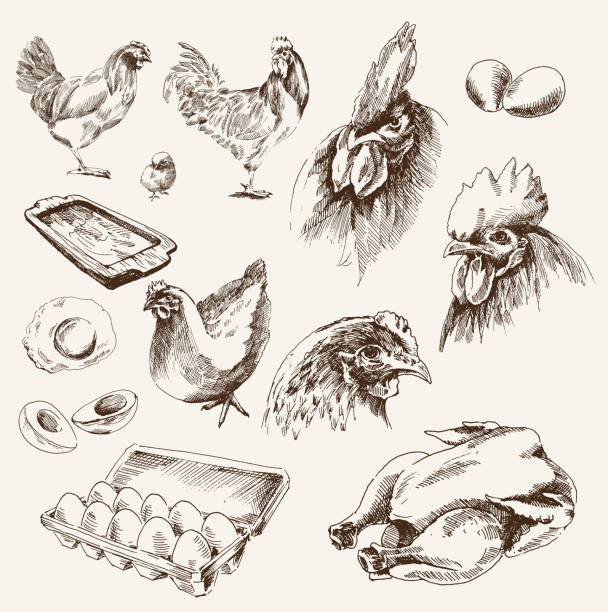 stockillustraties, clipart, cartoons en iconen met chicken breeding - egg