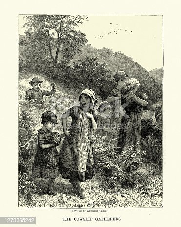 Vintage illustration of Children gathering cowslip (Primula veris) in a field, Victorian 1870s, 19th Century