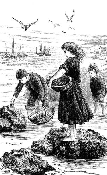 ilustrações de stock, clip art, desenhos animados e ícones de children with baskets at the shore collecting limpets - lapa