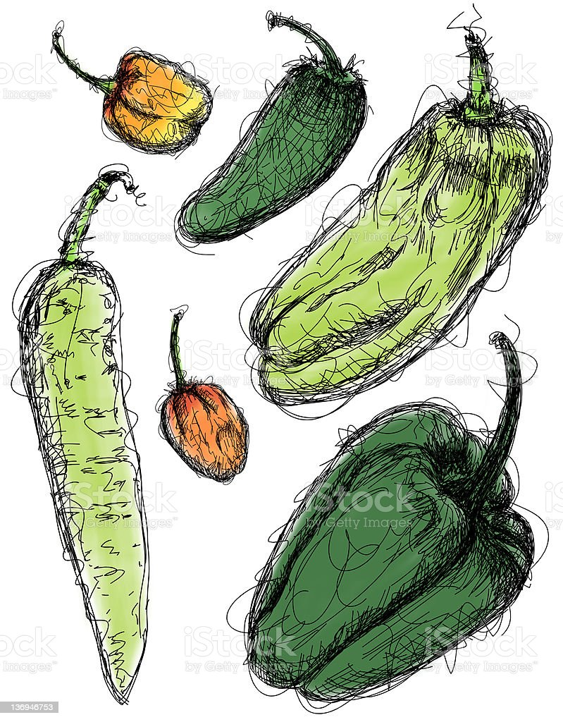 Chili Pepper Sketches royalty-free chili pepper sketches stock vector art & more images of art