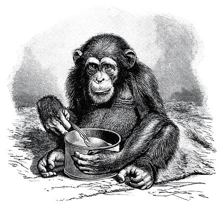 Chimpanzee with spoon and mug