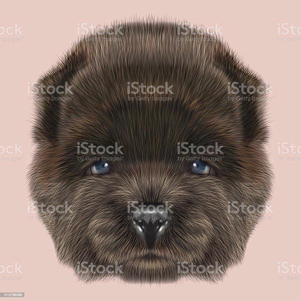 Chow Chow Puppy portrait vector art illustration