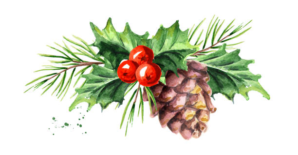 christmas and new year symbol decorative holly berry with pine cone and branch composition. watercolor hand drawn illustration, isolated on white background - gałązka stock illustrations
