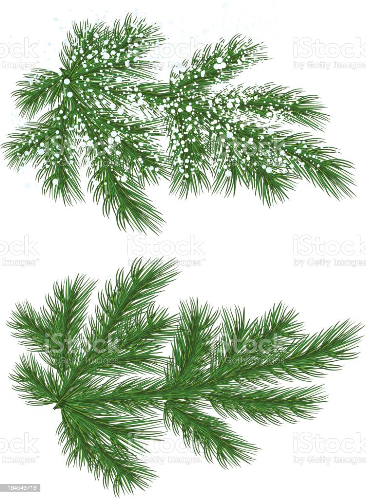 Christmas tree branch with snow vector art illustration