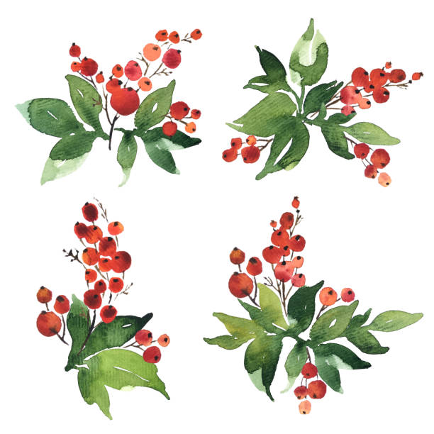 stockillustraties, clipart, cartoons en iconen met kerst aquarel set boeket arrangings. holly bessen met groene bladeren - bessen