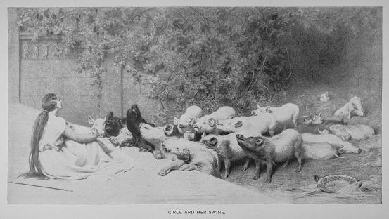 Circe And Her Swine