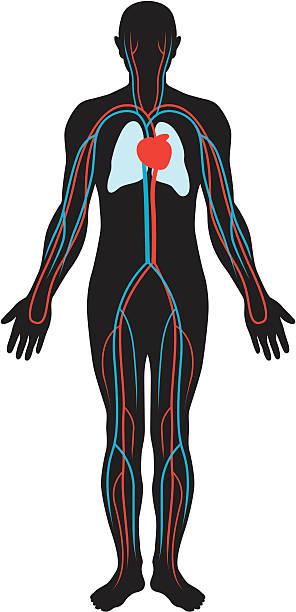 Circulation vector art illustration