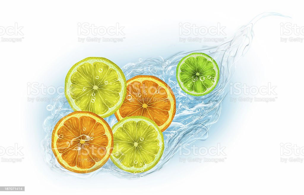 Citrus fruits on a white background vector art illustration
