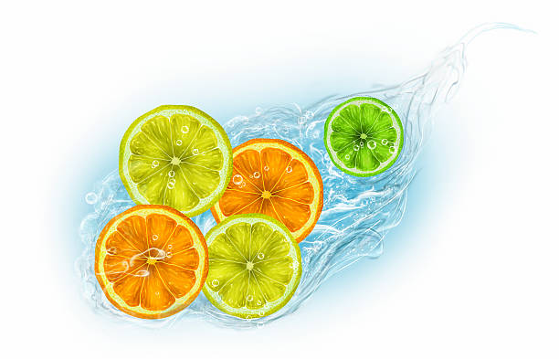 Citrus fruits on a white background vector art illustration