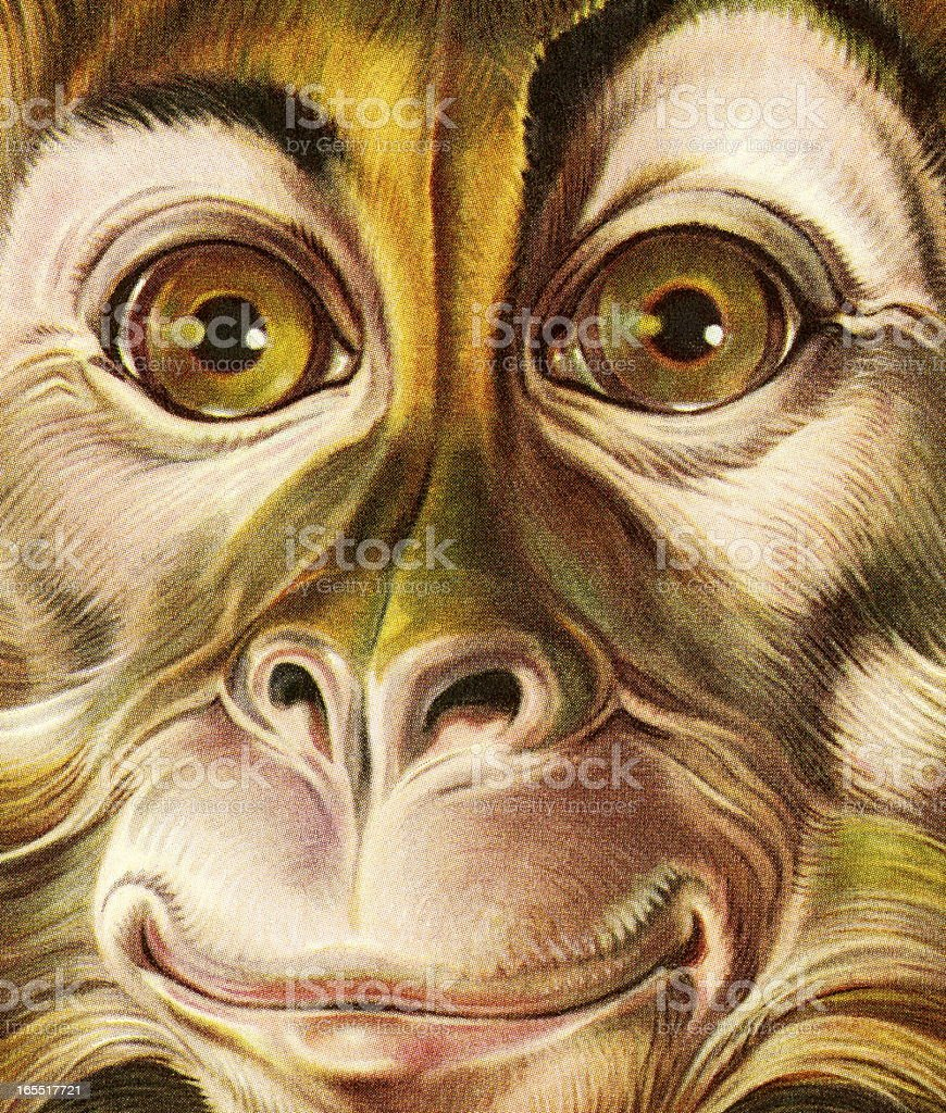 Closeup of a Monkey Face vector art illustration