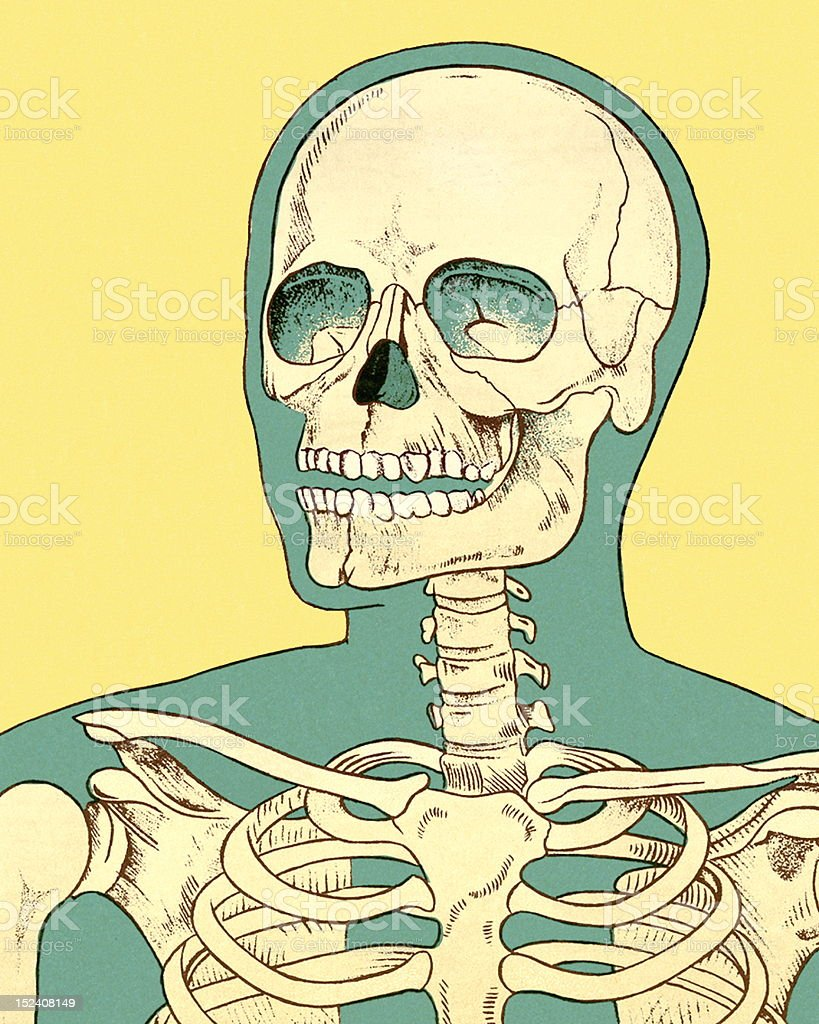 Close-up of Human Skeleton royalty-free stock vector art