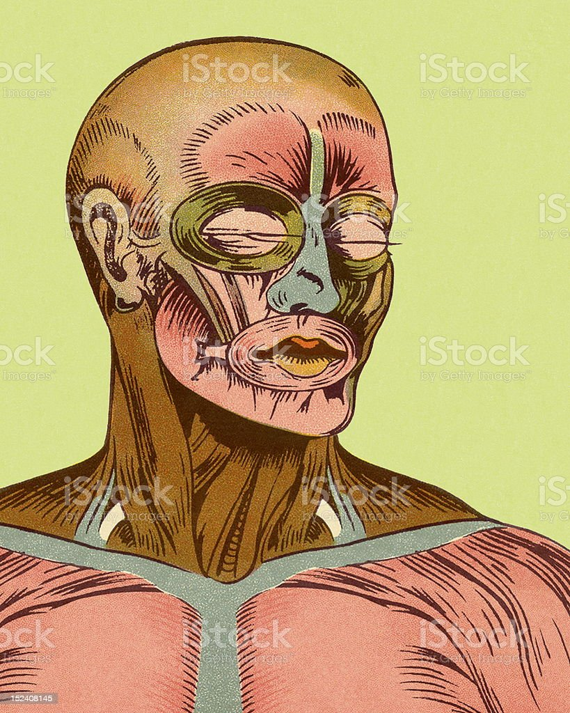 Close-up of Muscles of Head and Chest royalty-free stock vector art